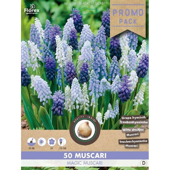 Muscari gemengd Magic